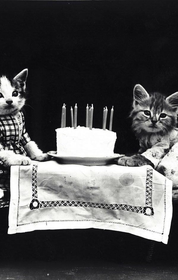 A vintage photo of a cat